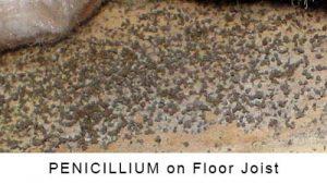 Penicillium on Floor Joist in Monroe NC