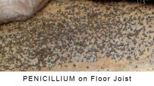 Penicillium on Floor Joist in Monroe NC