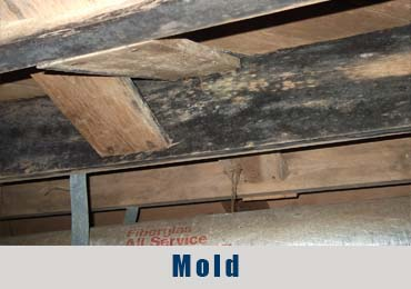 Mold- Charlotte Crawlspace Solutions, LLC  (704)
